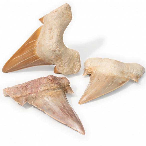 Fosile - Cristale naturale - Pietre semipretioase