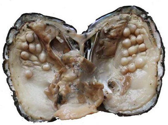 Perle - Cristale naturale - Pietre semipretioase